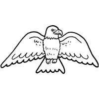 Eagle Wingspan