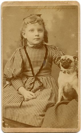 I Carlini nell'epoca vittoriana. Victorian Pug