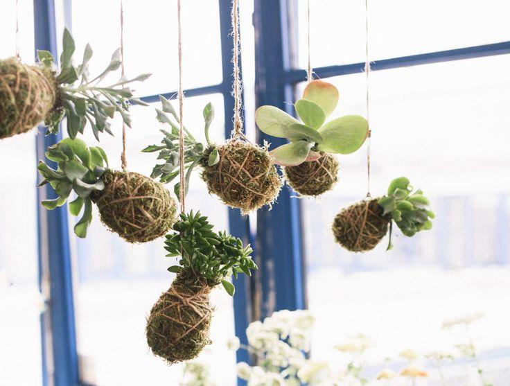 DIY: Klä in dina växter i mossa och häng upp – Kokedama