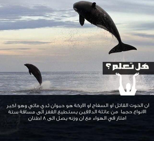 هل تعلم معلومات معلومة In 2020 Animals Whale Lol