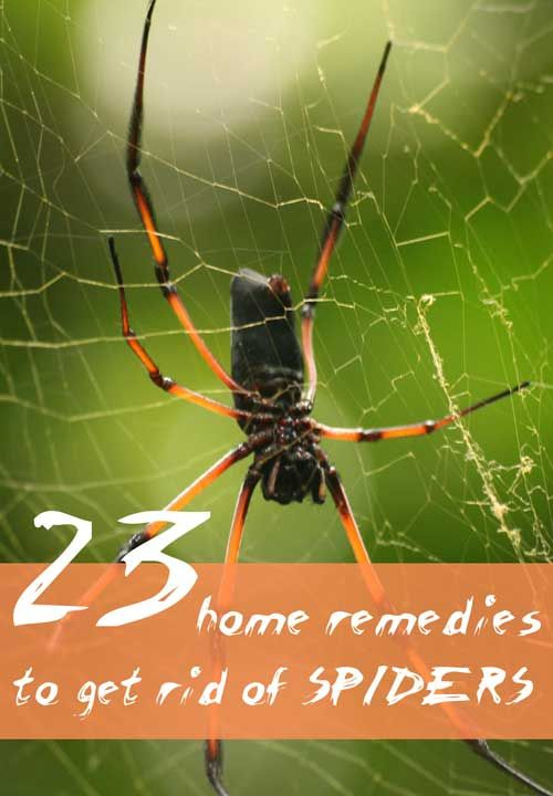 11 best Unwanted basement pests images on Pinterest Households Pest control and Cleaning