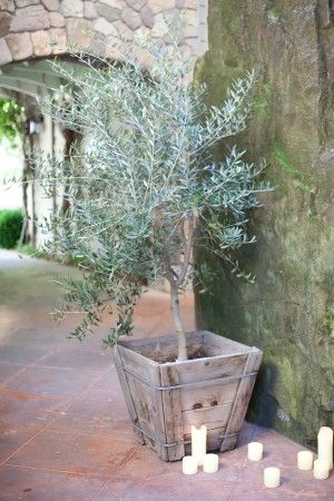 Wedding-Olive-TreeWedding Inspiration, Ideas Wedding, Olive Branches, Wedding Ideas, Wedding Olive Tre, Olive Wedding, Wedding Theme, Olive Trees Wedding, Diy Wedding