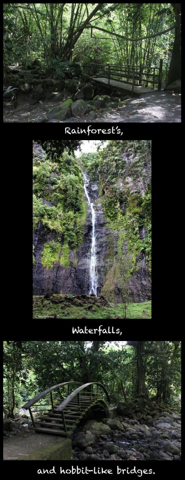 Rainforest, waterfall and bridges