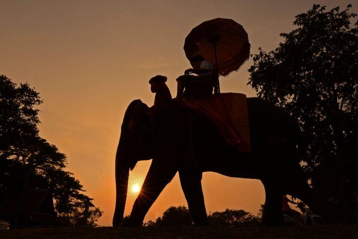 Elephant - Ayutthaya - Thaïlande  © Julien Delfosse