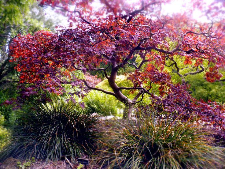 Dublin Botanic Garden