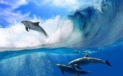 fototapet delfini