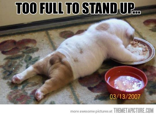 Too full… | Christmas foods, Cat food and Puppys