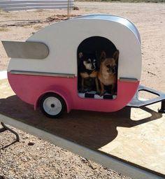 Camping Chihuahuas