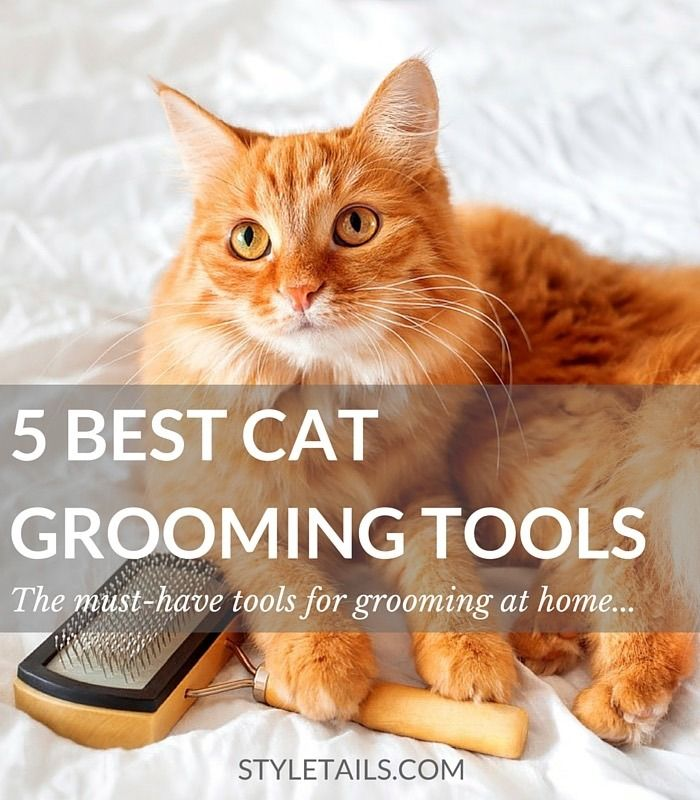 Do you struggle to groom your cat at home? Anita Kelsey, our resident cat grooming expert shares her top 5 tools for both long and short-haired cats: http://www.styletails.com/2016/04/11/5-of-the-best-cat-grooming-tools-you-need-at-home/