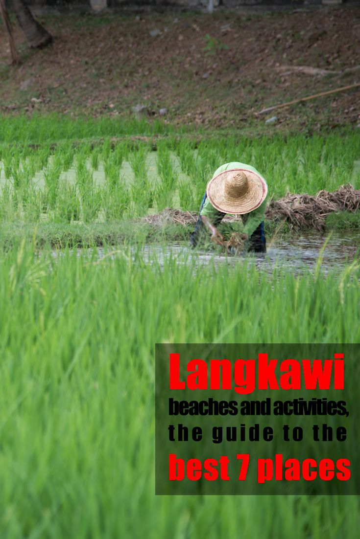 Working in the rice paddies, Langkawi  Langkawi beaches and activities, the best 7 places to be  http://mel365.com/langkawi-beaches-and-activities-the-best-7-places-to-make-a-photo-in-the-island/