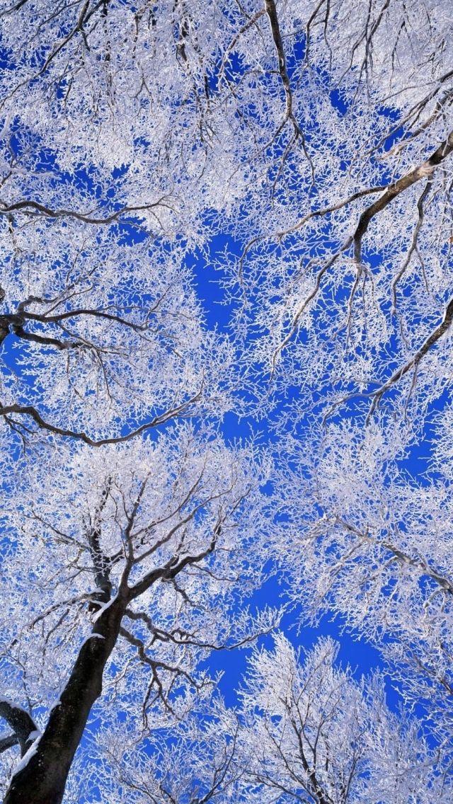 Frozen Ice Snowflake Macro iPhone  × пикс
