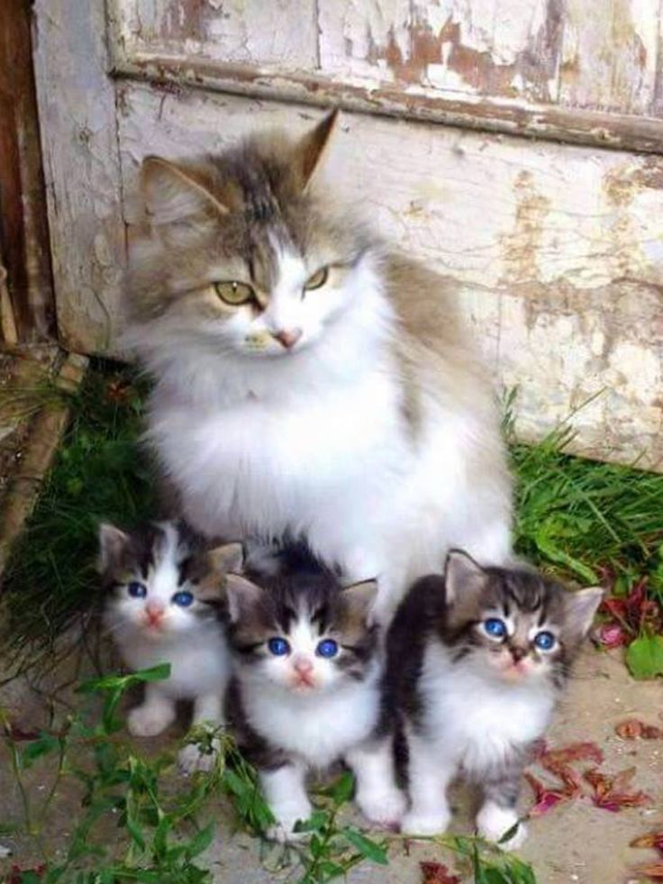 Mothers name:lillybloom Kittens names:Orchid,Daisy And Rose Ages:(mom) 20 moons (Kits) 3 moons Personalitys:(mom) Loving (Kits)Playful
