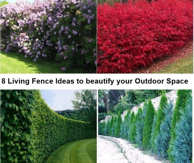 8 Living Fence Ideas To Beautify Your Outdoor Space Matchness Com Hedges Landscaping Living Fence Backyard Landscaping