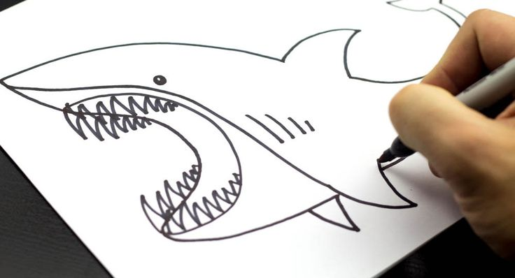 how to draw a shark kids