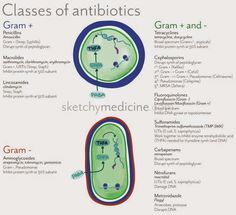 class+of+antibiotics.jpg (800×729)