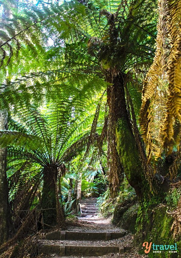 Discover Tasmania - Liffey Falls and the Central Plateau Conservation Area