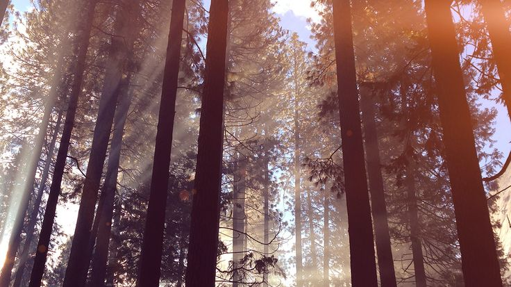 desktop-wallpaper-laptop-mac-macbook-air-nh67-forest-wood-tree-light-summer-nature-flare-wallpaper