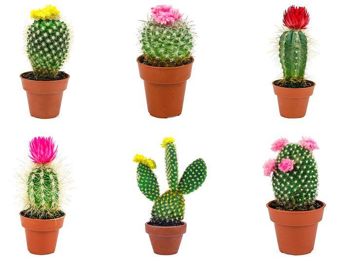 Και τα 7 (Φυτά για το γραφείο) ήταν υπέροχα!