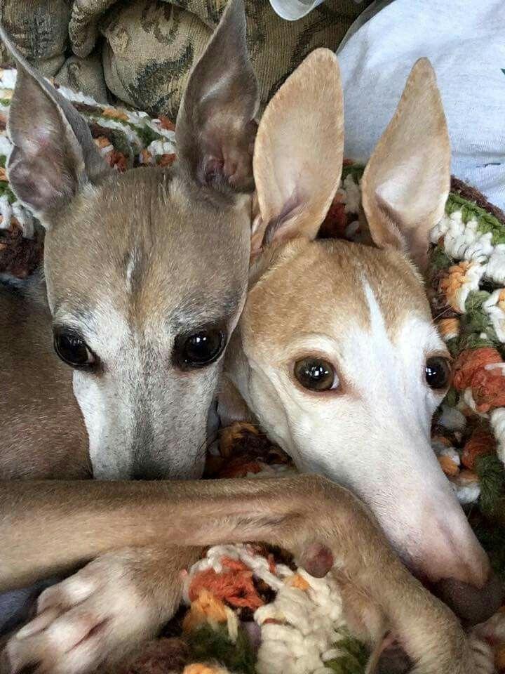 Adorable! I love mule eared needle noses!