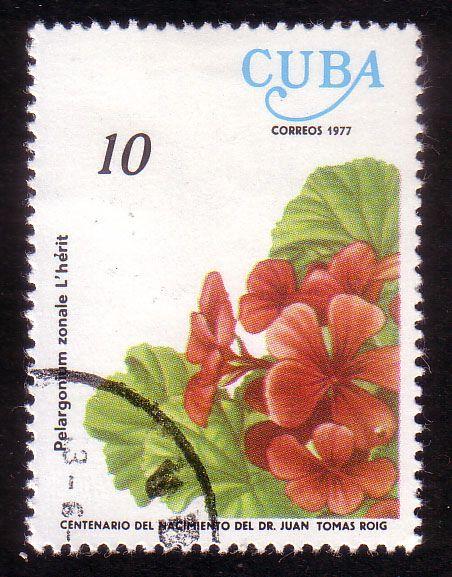 Pelargonium zonale, 1977 (Gonmi) Tags: post stamps cuba collections 1977 geranium postage posta philately correos sellos filatelia timbres malvón philatellic stampii