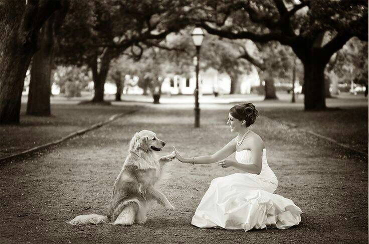Dogs at the wedding will happen