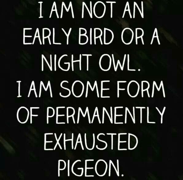 Lol except I am still somehow a night owl, which makes me the exhausted pigeon.