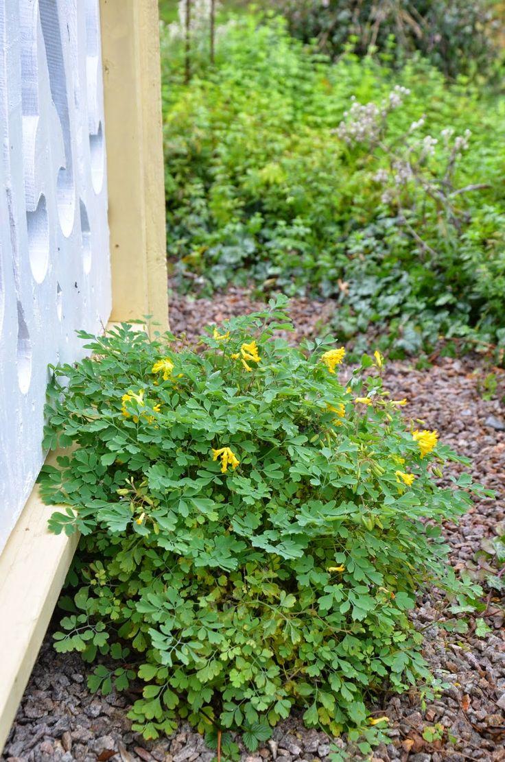 Högagärde: Blommig Fredag: höstens krigare