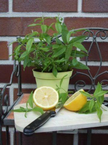 Lippia citrodora ( aloysia ) - citrónová verbena, yerba maté
