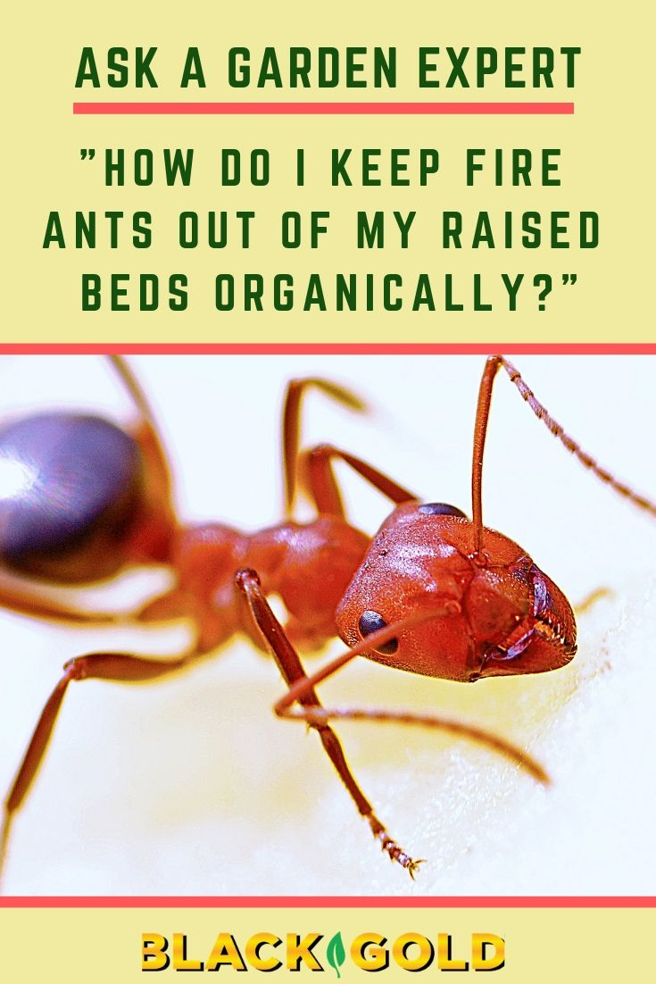 87ef93b8564170c837617817bb8b3437 - How To Get Rid Of Ants In Vegetable Garden Naturally