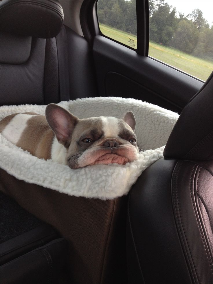 3032 Best Cute Images On Pinterest French Bulldogs