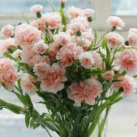 30 единиц / мешок гвоздики семена цветов, цветы дома сад смешивания гвоздика семена Caryophyllus бонсай цветок Бесплатная доставка