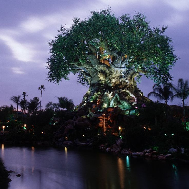 Tree of Life - Animal Kingdom Disney World. Just amazing
