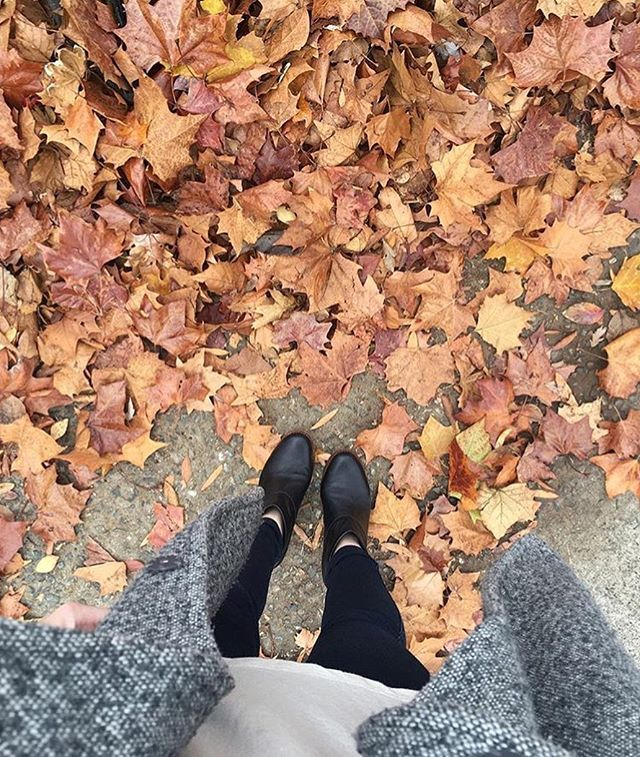 Fall Pictures, Fall Photos, Fall Wallpaper, Hello Autumn, Autumn  Inspiration, Falling Leaves, Fall Harvest, Halloween Pics, Happy Fall