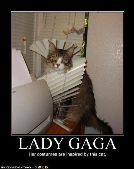 lady gaga cat - this is for my mom!