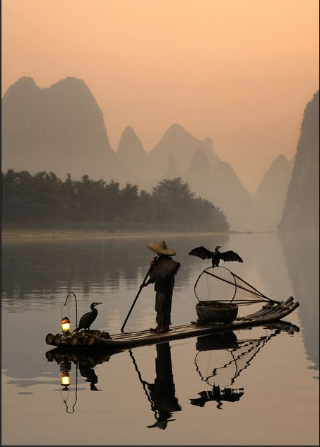 Guilin, China.  The birds dive into the water with a rope around their neck so the fisherman can retrieve it upon the bird surfacing.  The bird gets the last fish of the night to eat.