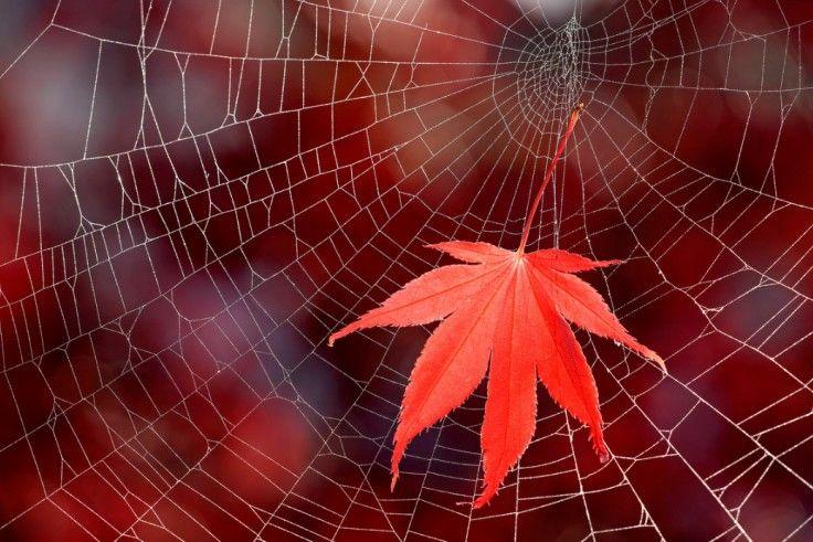 Красные клёны Осенняя фотоподборка — Российское фото