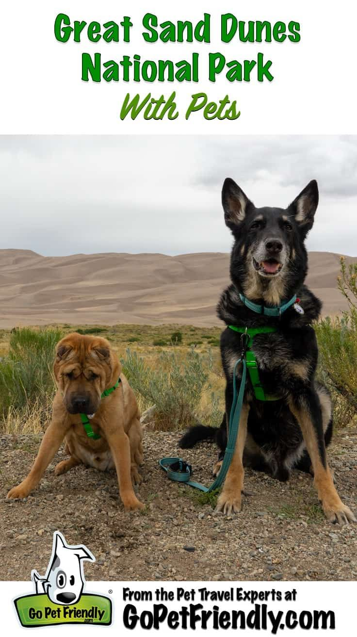 Visiting Great Sand Dunes National Park With Pets Sand Dunes National Park Dog Friends Dog Travel