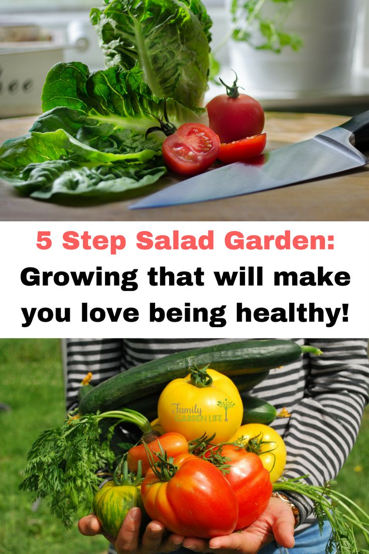 5 Step Salad Garden: Growing a salad garden is something I do every year because it's so easy, fresh and it saves me so much money and time. Eating salad almost every day is a delicious way to clean up your food intake. If not for dinner, then reach for it at lunchtime. It's my fast food, especially if I'm overdue for my weekly grocery shop. Grab a basket and head straight to the veggie patch.