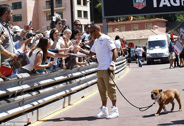 Companion: Lewis Hamilton took his pet dog Roscoe for a walk in the Monaco paddock