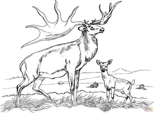 Awesome Image Of Hunting Coloring Pages Albanysinsanity Com Deer Coloring Pages Horse Coloring Pages Animal Coloring Pages
