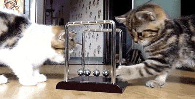 #Физика интересная всем!  #инженер #технарь #эксперимент #кот #кошка #котенок #шарик #задача #игра #инженернаястудия