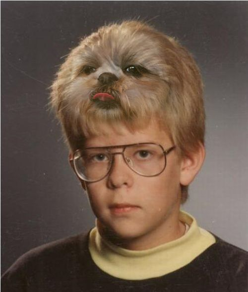 : Hair Pieces, I Cant, Awkward Families Photo, Christmas Sweaters, Funny Photo, Schools Photo, Shih Tzu, So Funny, Can'T Stop Laughing