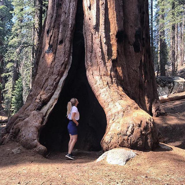 Dernier jour en Californie... ça aura été l'un de mes plus beaux voyages. J'appréhendais un peu de ne pas aimer avant de partir, mais finalement j'ai hâte de revenir 💙 l'immensité des paysages me manquera ! #california #roadtripcalifornie #sequoia