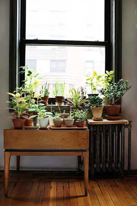 Love this! I have been in a fung shway mood lately and trying to add more LIVE plants to the house.