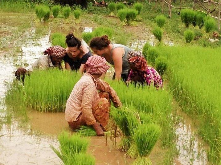 Participation des voyageurs à la vie locale cambodgienne