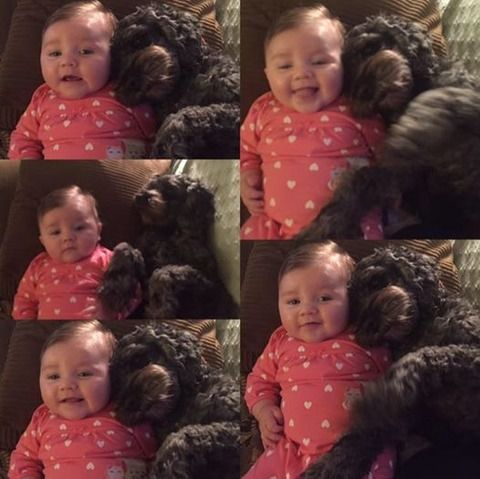 ひかたま(光の魂たち)命がけで赤ちゃんを守りぬいた愛犬