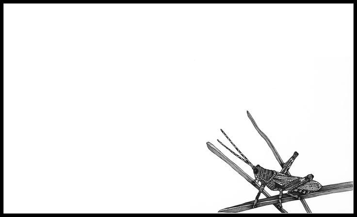 CICADA. Ink on paper. Black and white. 45x27cm #deltakappadesign