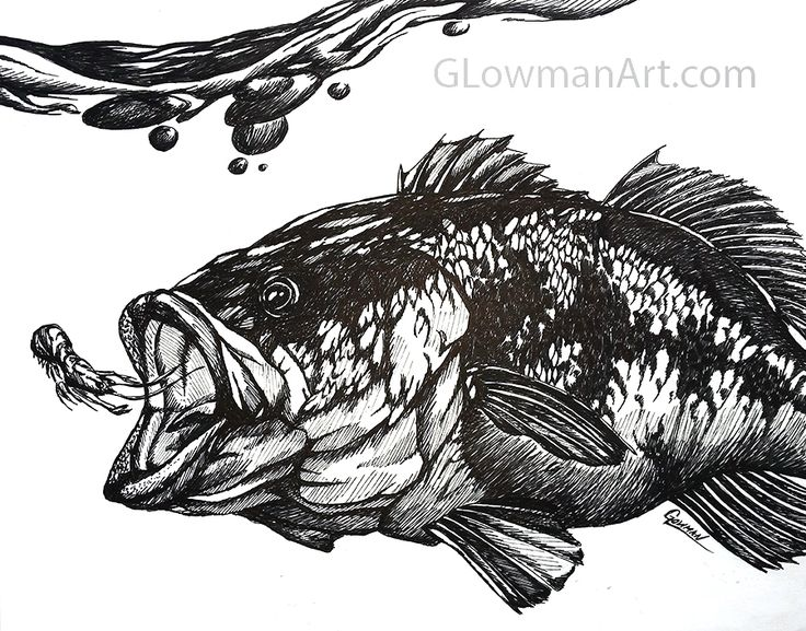 largemouth bass drawing freaking awesome httpglowmanart
