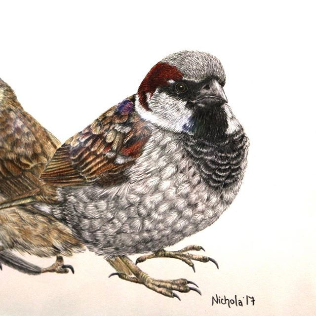 The detail in this pencil piece by the talented Nichola Ahlers is truly incredible. #talentedkiwis #pencil #lifelike