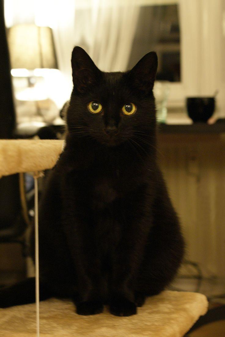 Cute black cat Maya <3 #black #cat